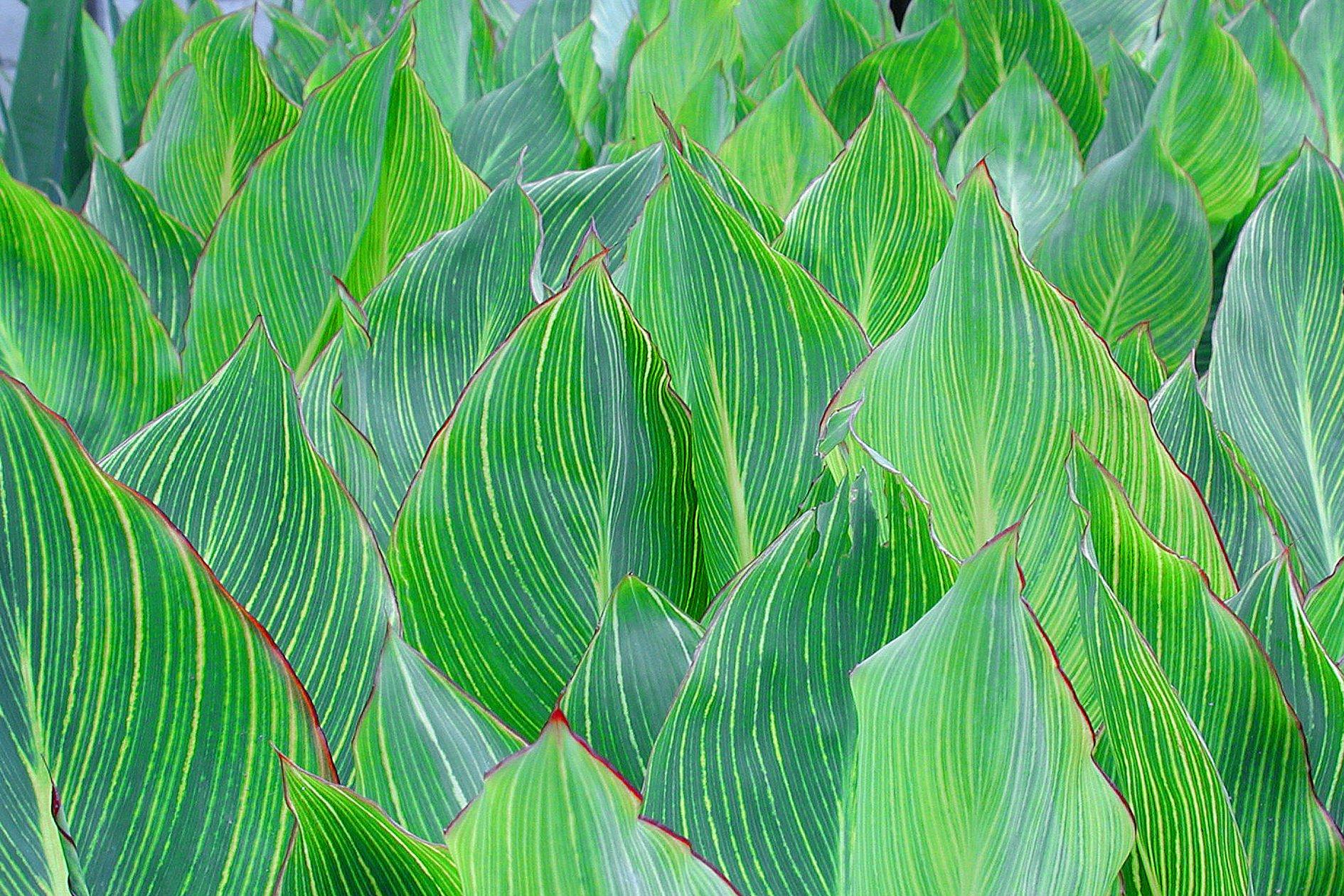 Fotografía de hojas por Cote Cabrera. 2018